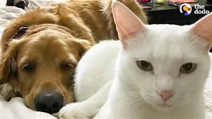 Cat And Dog Have Totally Changed Their Moms U0026 39  Lives