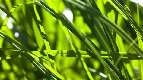 Pflanzen Für Die Küche by A Z Pflanzen Pflanzen Natur Planet Wissen