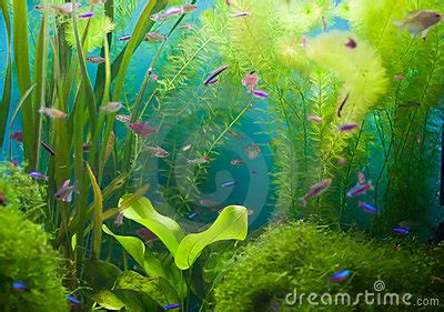 aquarium  fish  seaweed royalty  stock photo