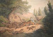 Dhole - Wikipedia