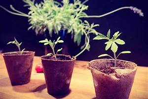 Tomaten Selber Anbauen : urbangardening trend tomaten selber anbauen ~ Orissabook.com Haus und Dekorationen