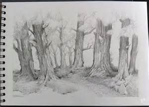 Forest Pencil Drawing