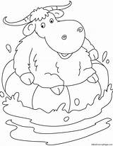 Yak Coloring Pages sketch template