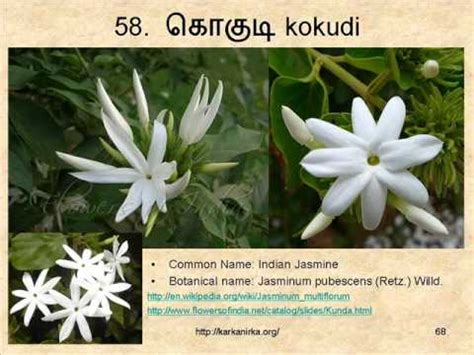 flowers names  tamil  english  flowers youtube