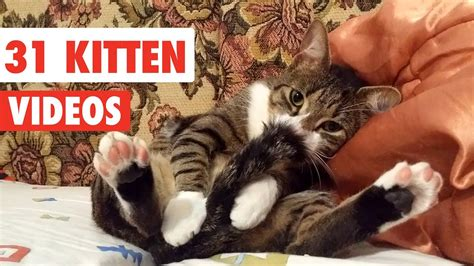31 Cute Cats  Funny Cat Video Compilation 2017 Youtube