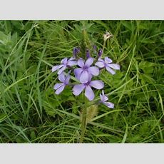 456 Best Kansas Native Plants Images On Pinterest Native