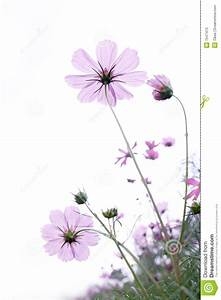 Wild Flower Stock Photos - Image: 7547413