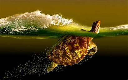 Turtle Desktop Wallpapers Backgrounds Sea Background Turtles