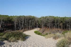 Dunes Et Marais : reserve naturelle des dunes et marais d 39 hourtin balades et pistes cyclables ~ Maxctalentgroup.com Avis de Voitures