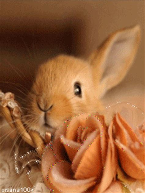 sweet  bunny pictures   images