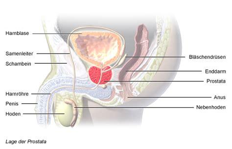 Verstopfung: Was hilft, wenn der Darm streikt?