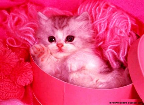Animated Cat Wallpaper Free - cat with pink background all hd wallpapers