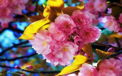 Free Beautiful Spring Flowers Computer Desktop Wallpaper