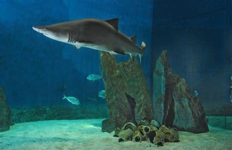 Costo Ingresso Acquario Di Genova - acquario di genova scuola natura