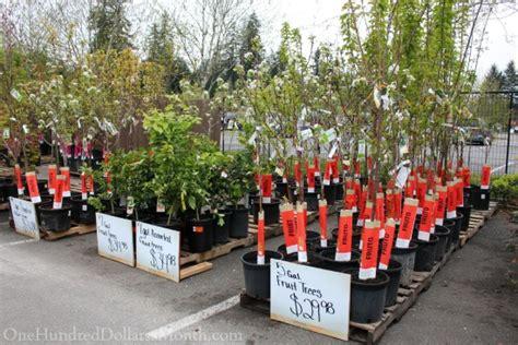 sweet deals   home depot plant  garden sale