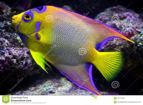Tropical Reef Fish Stock Image Image Of Coral Swimming