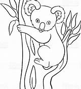 Koala Coloring Pages Printable Drawing Doodle Bear Animals Tree Smiles Vector Australian Getdrawings Line sketch template