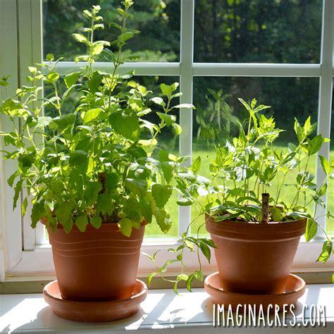 herb windowsill garden low herbs maintenance growing fresh benefits enjoy without way imaginacres