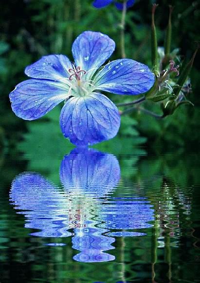 Flores Agua Movimiento Imagenes Azules Animadas Animados