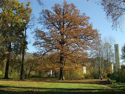 Alter Botanischer Garten Marburg by Freundeskreis Alter Botanischer Garten Marburg