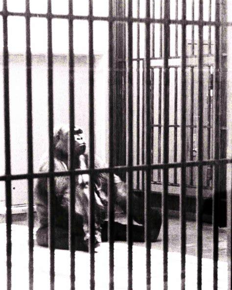filecaged animal black  white  jpg wikimedia