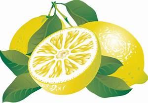 Lemon clip art - Fruit clip art - DownloadClipart.org