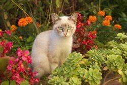 Katzen Aus Garten Vertreiben : katzen aus dem garten vertreiben 5 effektive tipps ~ Frokenaadalensverden.com Haus und Dekorationen