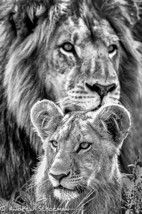Father and Son by Andrew Schoeman ~ Father and son in the