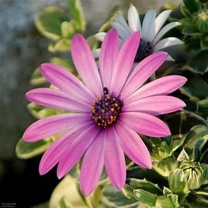 Garten Blumen Bilder : bluete fruehjahr garten blumen blueten bienennahrung ~ Whattoseeinmadrid.com Haus und Dekorationen