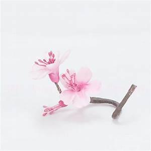 Drawn sakura blossom single - Pencil and in color drawn ...