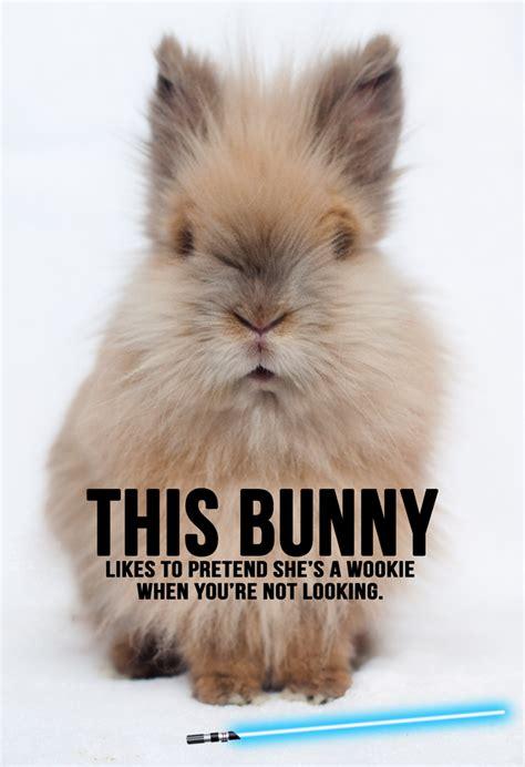Bunny Meme - rabbit ramblings funny bunny memes bunnies pinterest funny bunnies rabbit and bunny