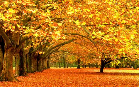 Desktop High Quality Fall Backgrounds by Autumn Wallpapers Images Photos Pictures Backgrounds