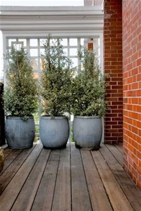 1000 images about potted plants on potted