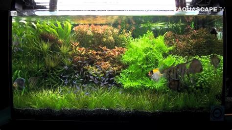 Aquascape Ideas by Aquascaping Aquarium Ideas From Zoobotanica 2013 Pt 4