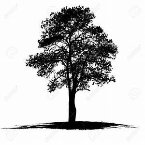 Oak Tree Drawing Clip Art (77+)