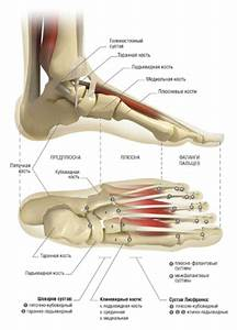 Блуждающие боли в суставах и мышцах как лечить