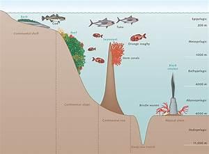 Depth Zones Of The Ocean  U00ab World Ocean Review
