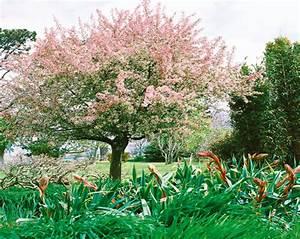 Les Plus Beaux Arbres Pour Le Jardin : les arbres et les arbustes fleurs pour votre jardin ~ Premium-room.com Idées de Décoration