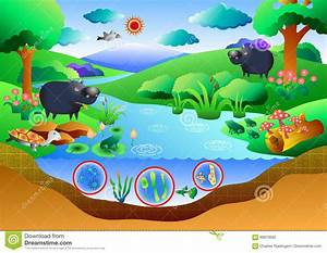 Ecosystem Diagram Stock Vector  Image Of Ground  Country