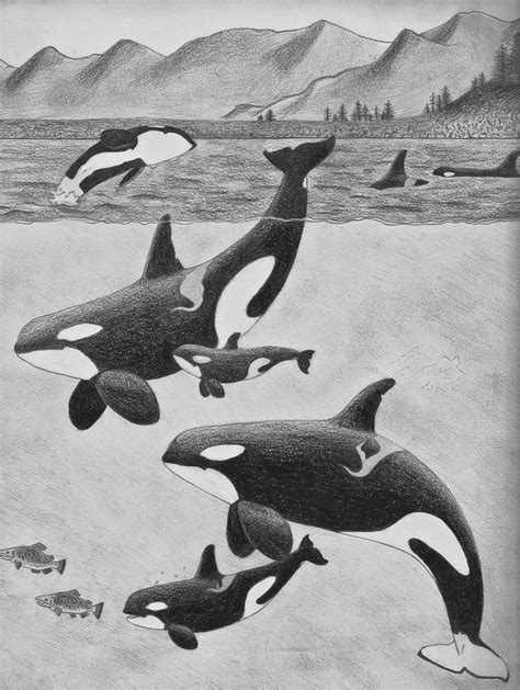 The 25+ best Orca art ideas on Pinterest | Whale art