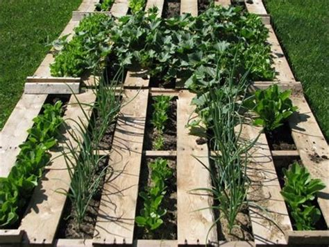 Elegant Pallet Vegetable Garden Ideas