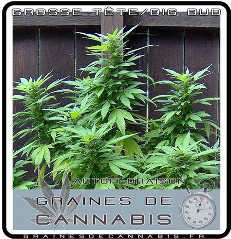 les bureaux de vote ferme a quel heure produit pour cannabis exterieur 28 images serre tunnel
