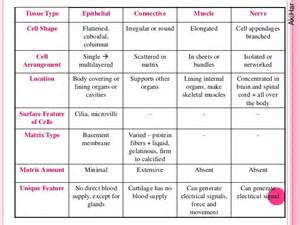 Epithelial and Connective Tissue Types