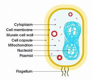 Organelle  Definition  Function  Types And Examples