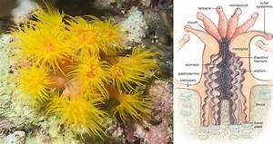 Coral Biology  Part I  U2022 Scuba Diver Life