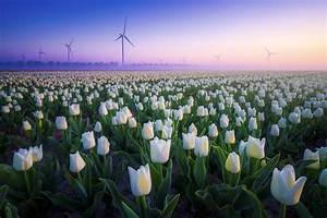 Amazing, Aerial, Images, Show, The, Tulip, Fields, From, Above
