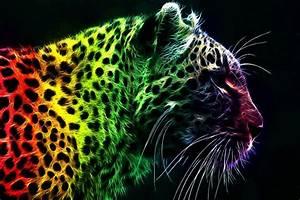 Pictures Of Cheetah Print Wallpaper  U00b7 U2460 Wallpapertag