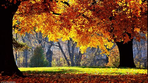 Fall Backgrounds Yellow by Fall Trees Nature Yellow Wallpapers Hd Desktop And