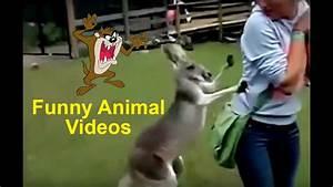 Funny Animal Vi... Funny Videos