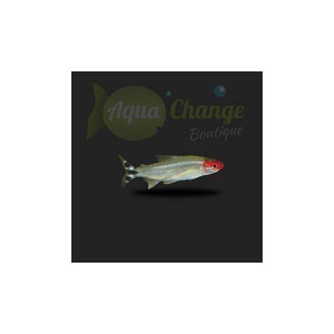 achat poisson en ligne